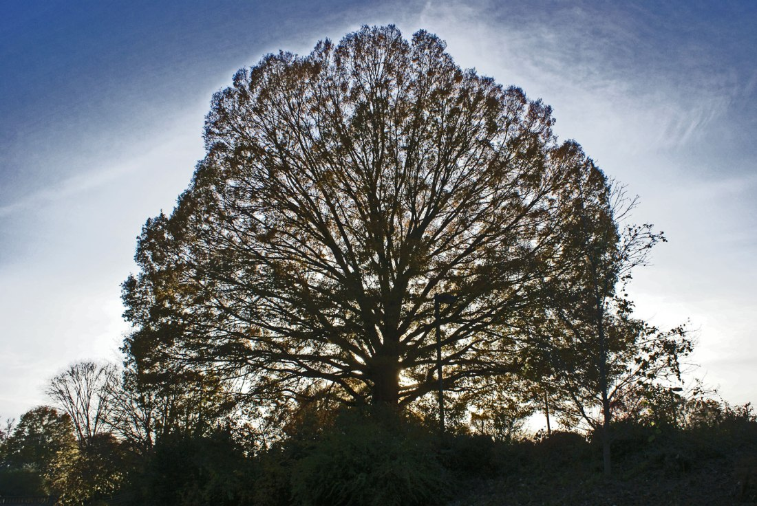 tree in evening sun